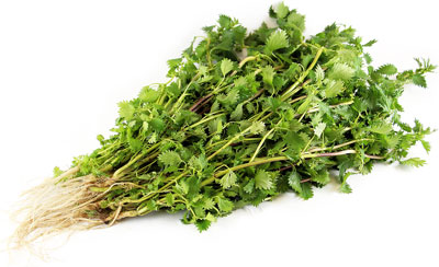 Stinging Nettle Root testosterone boosting substances