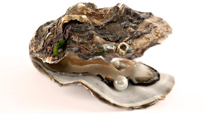 TestoTEK ingredients oyster extract